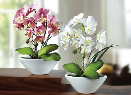 Orchideen, 2er-Set